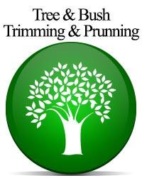 Tree & Bush Trimming & Prunning