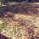 Fall Clean Up Leaves